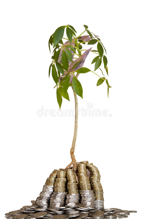 Объект денег изолированный деревом на бело- растет ваш Mo стоковая фотография rf
