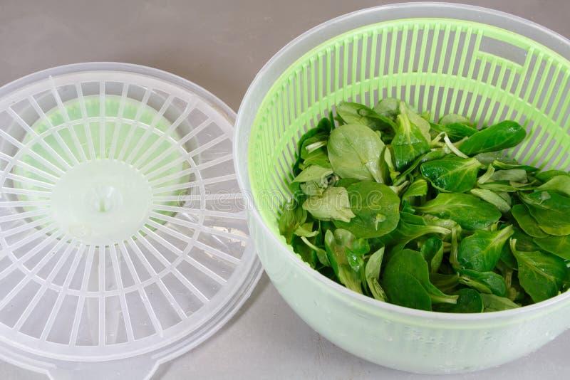 Объягнитесь салат ` s в обтекателе втулки салата стоковое изображение