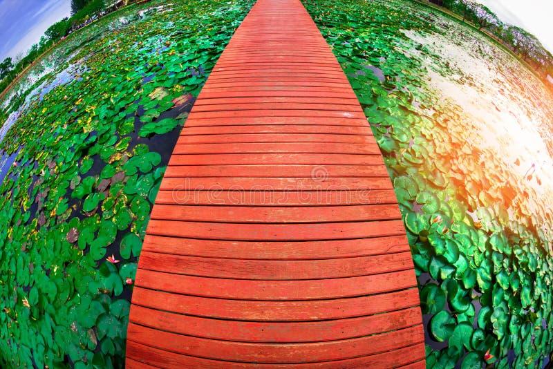 Объясните, где находится месторождение лотоса большого парка в провинции Сакон Нахон, Таиланд стоковые фотографии rf