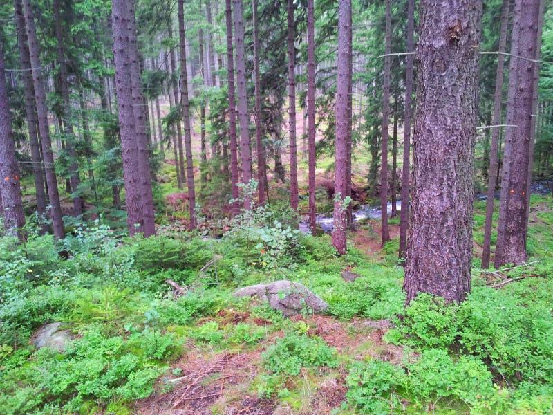 Обычный взгляд леса стоковое фото rf