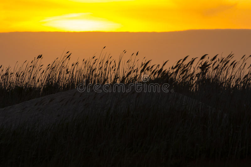 Облака персика за дуя тростниками дюны на заходе солнца стоковые фото