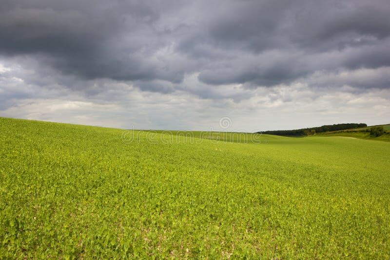 Облака поля и шторма гороха стоковое изображение rf