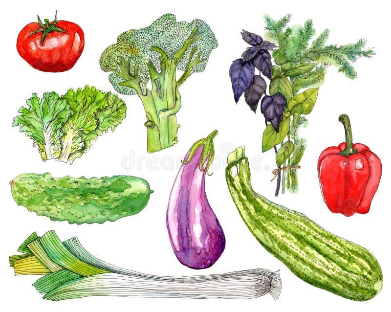 Download Овощи акварели установленные на белую предпосылку Иллюстрация штока - иллюстрации насчитывающей картина, свеже: 81814405