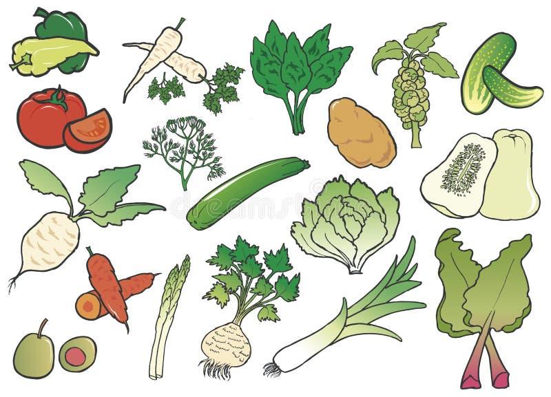 овощи группы цвета иллюстрация вектора