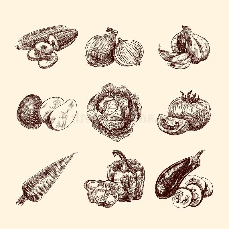 Овощи делают эскиз к комплекту бесплатная иллюстрация