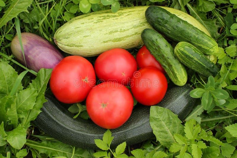Овощи на траве стоковые изображения