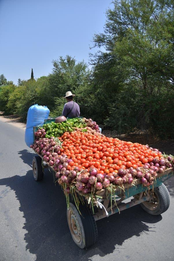Овощи нося фермера на тележке вытянули лошад-Марокко стоковое фото rf