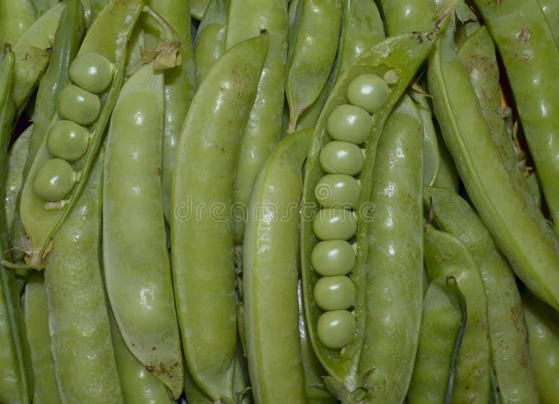 овощи подрезывают chili диеты лист цвета горохи стручка гороха зеленой еды перца крупного плана фасоли естественного вегетарианск стоковое изображение