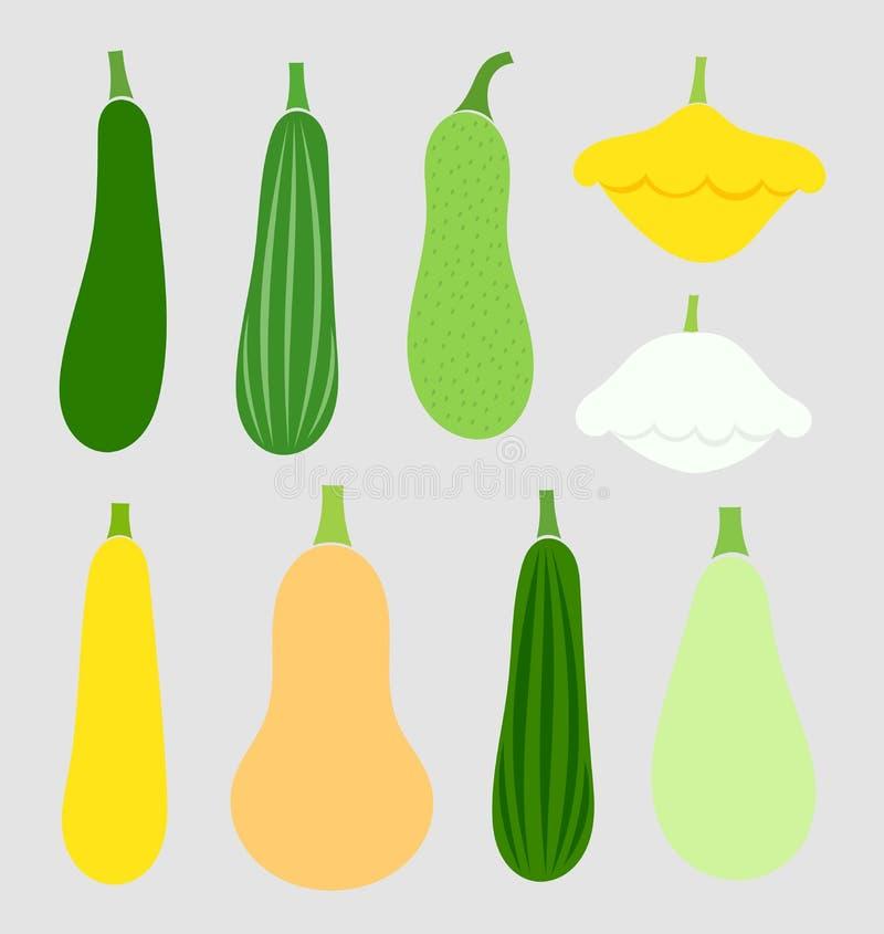 Овощи сквоша лета иллюстрация вектора