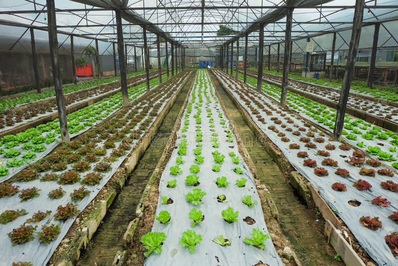 Овощи фермы растущие внутри помещения стоковое фото rf