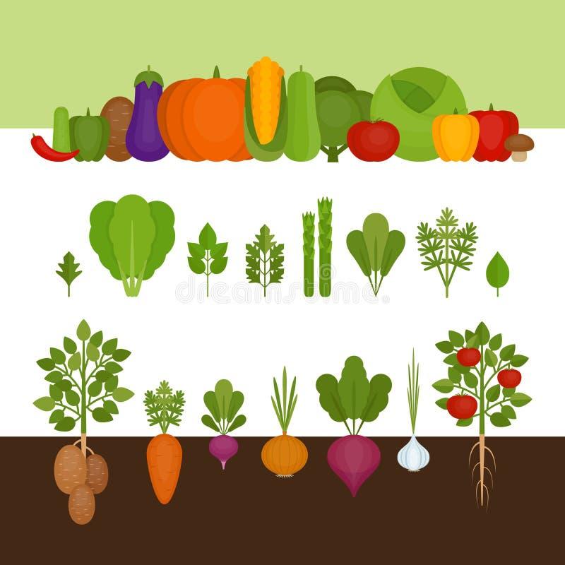 овощи элемента конструкции собрания Органическая и здоровая еда Плоский стиль, vec иллюстрация вектора
