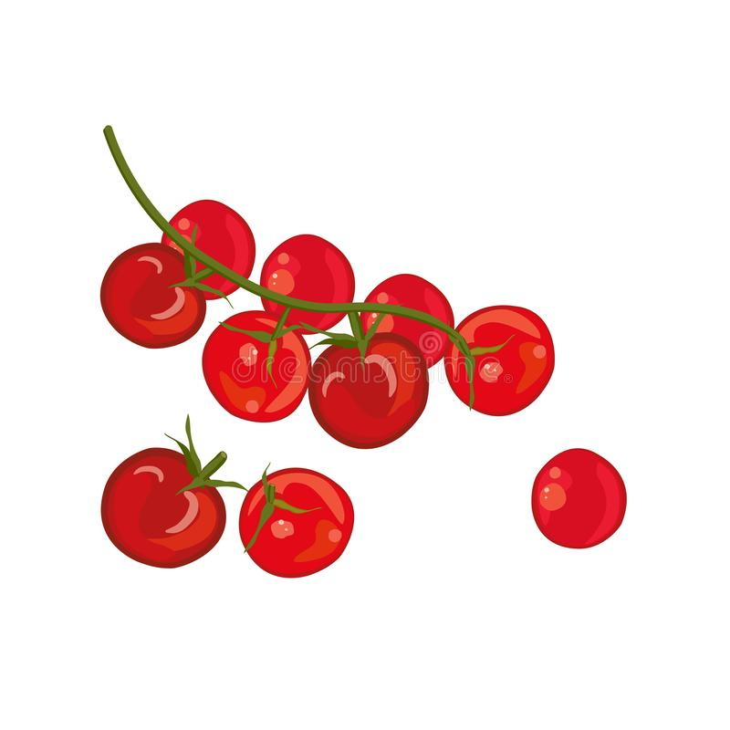 Red cherry tomatoes, raw vegetables. Whole and sliced. Vector illustration. royalty free illustration