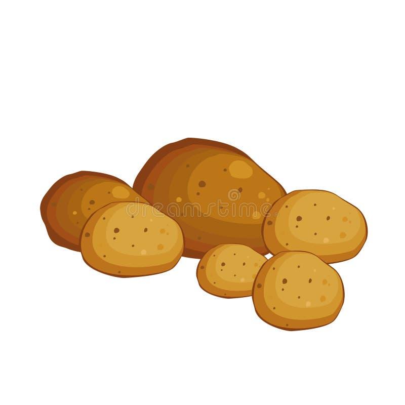 Potato. Vegetables from the garden. Vector illustration. vector illustration
