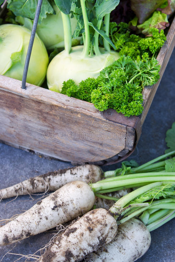 Download Овощи стоковое изображение. изображение насчитывающей редиска - 41663191