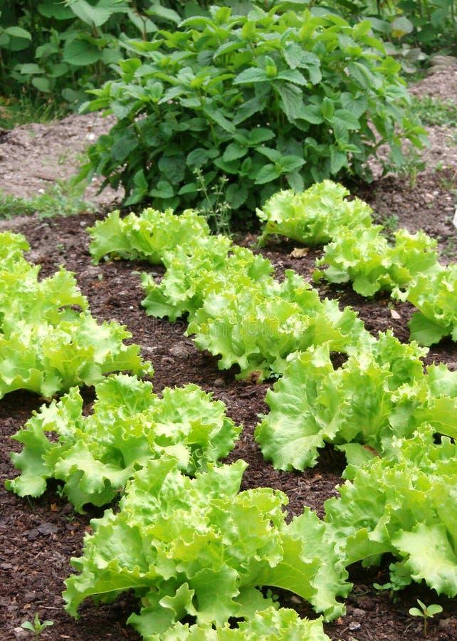 овощи springtame стоковые изображения rf