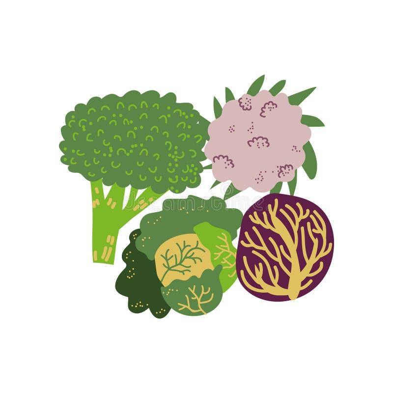 Овощ различных разнообразий капусты свежий, органическая питательная иллюстрация штока