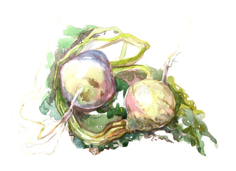 Овощ редиски стоковое изображение rf