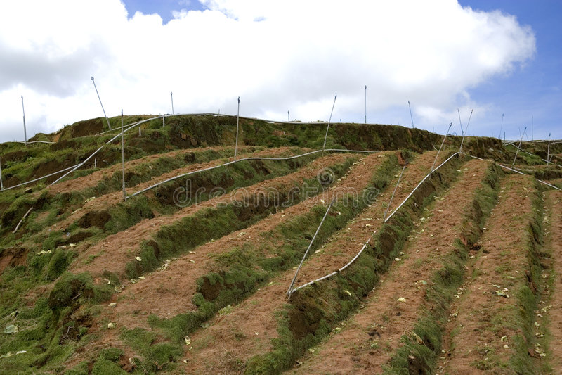 овощ террасы фермы стоковая фотография rf
