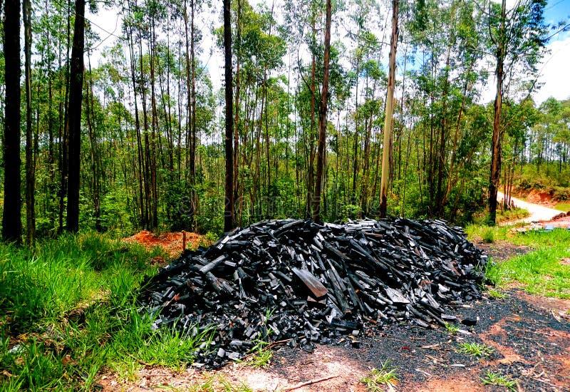 Овощ угля произвел через горение древесины стоковые изображения rf