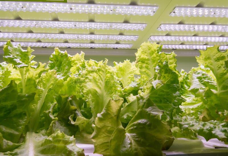 овощ фермы hydroponic органический стоковая фотография