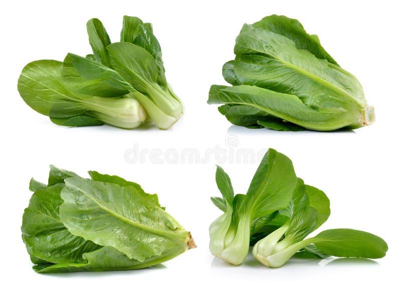 Овощ Bok choy и салат Cos на белой предпосылке стоковые изображения rf