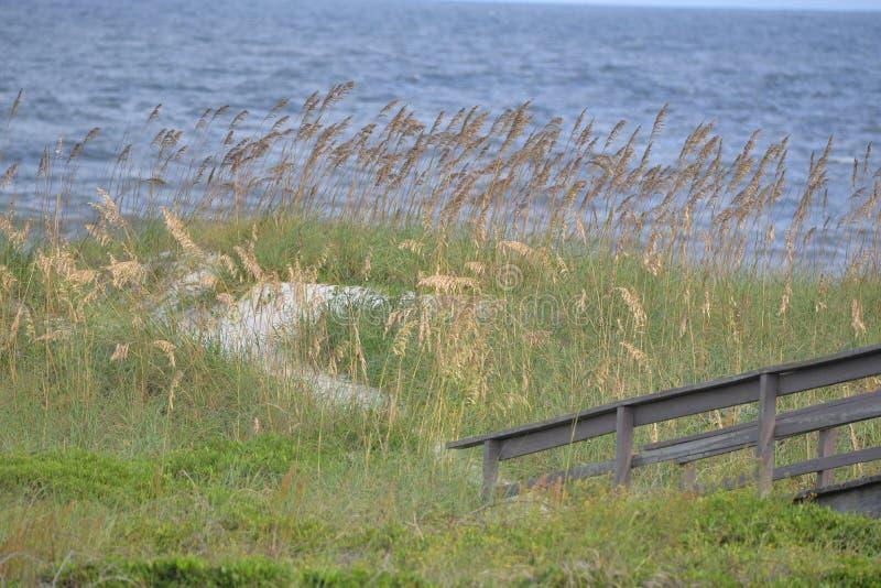 Овсы моря веха для пути природ сохранять пляжное от строгого размывания стоковое изображение