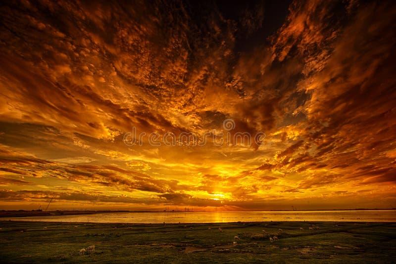 Овцы и заход солнца стоковая фотография
