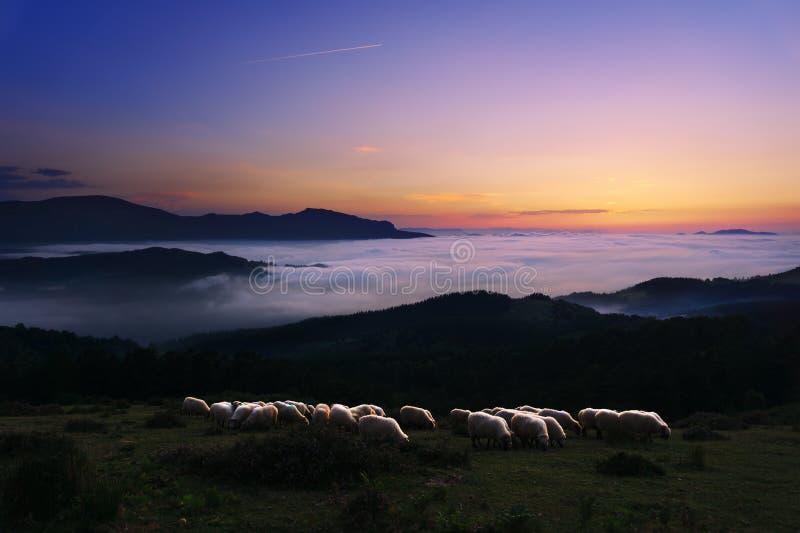 Овцы на сумерк в горе Saibi стоковые изображения rf