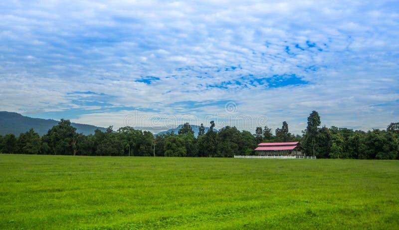 Овцы обрабатывают землю в луге на день голубого неба стоковые фотографии rf