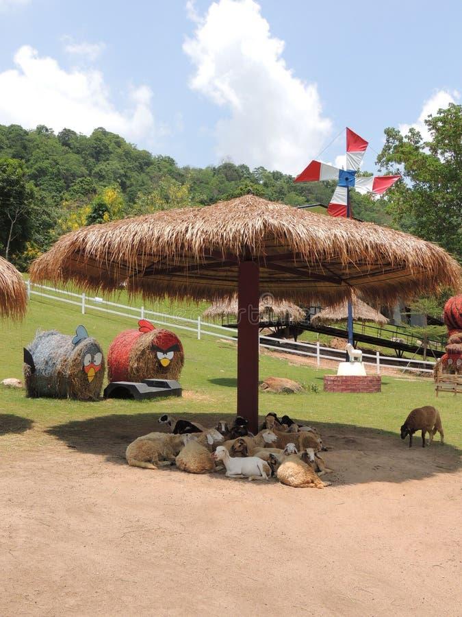Овцы под укрытием и стога сена в форме сердитых птиц стоковая фотография
