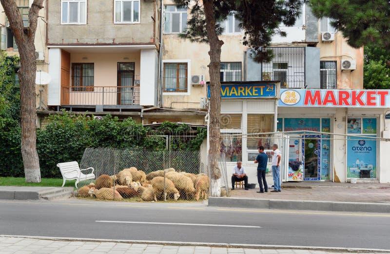 Овцы продажи людей во время al-Adha Eid фестиваля Bakrid _ стоковые изображения rf