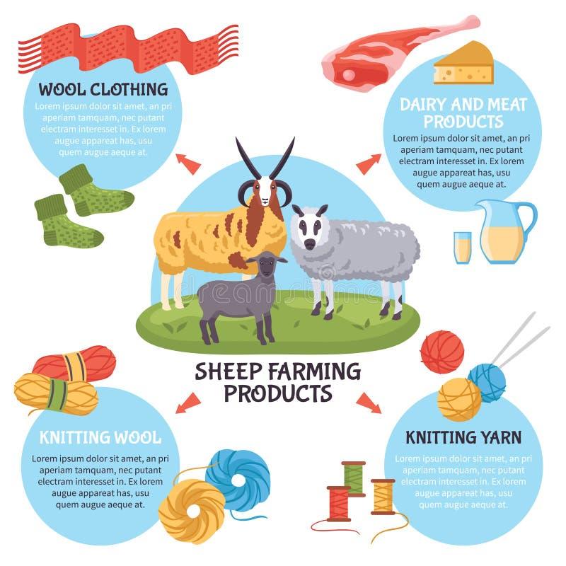 Овцы разводя Infographics иллюстрация штока