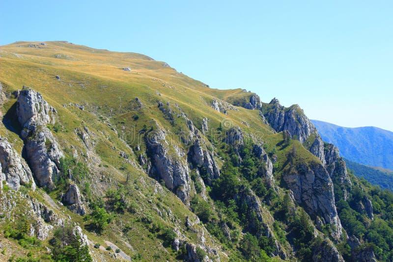 Овцы собираются на луге горы стоковая фотография