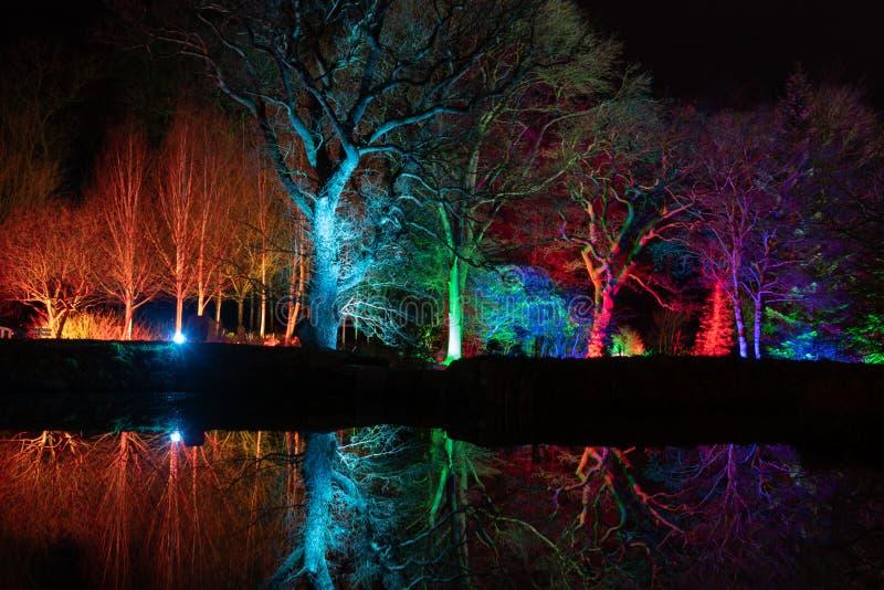 Оглушать красочное floodlit дерево вечером стоковые фотографии rf