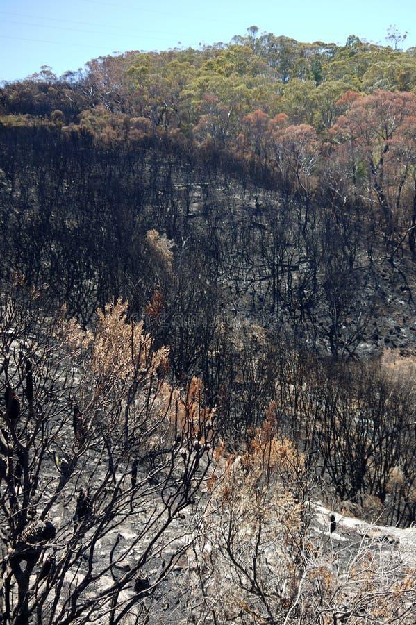 Огонь Австралии куста: сгорели горный склон стоковая фотография