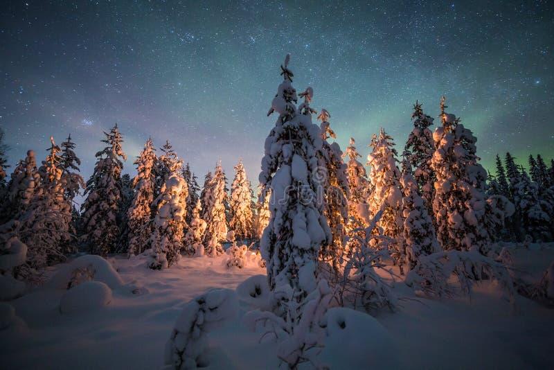 Огонь лагеря в лесе в Лапландии стоковые фото