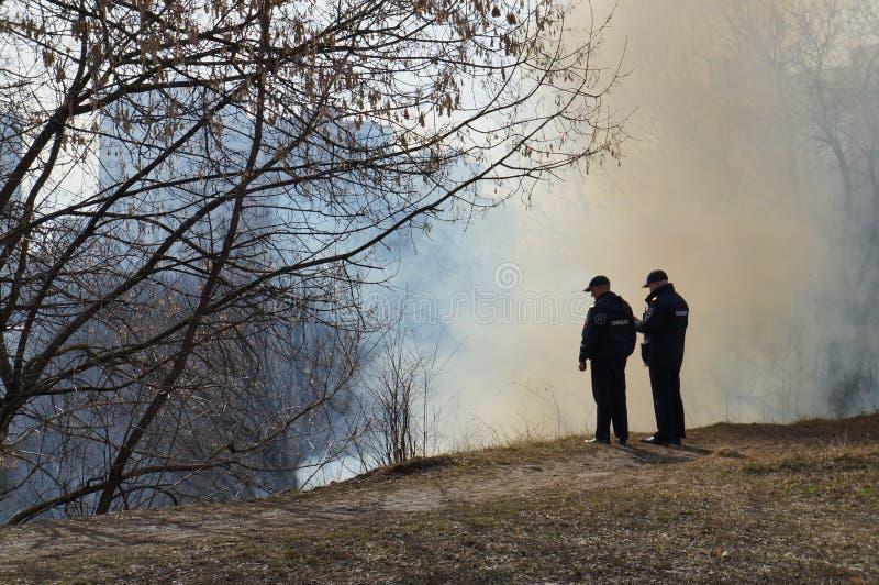 Огонь в лесе, горение сухой травы стоковая фотография rf