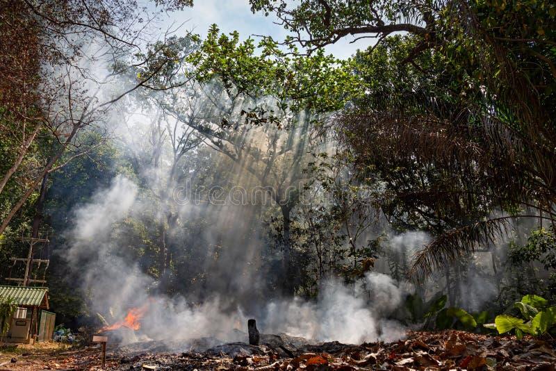Огонь в тропическом лесе должном к горячему климату много дым и зола, отрезок лучей солнца через деревья стоковое изображение