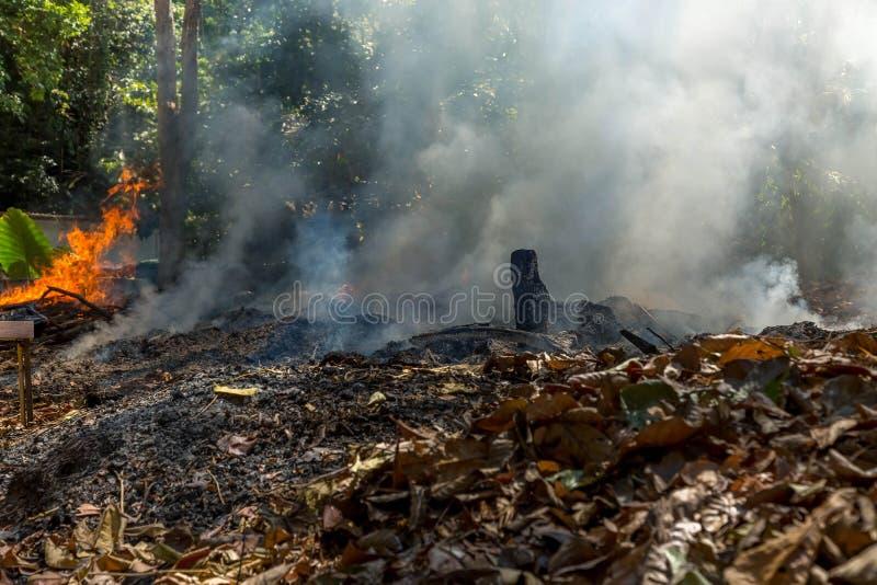 Огонь в тропическом лесе должном к горячему климату много дым и зола, отрезок лучей солнца через деревья стоковое фото