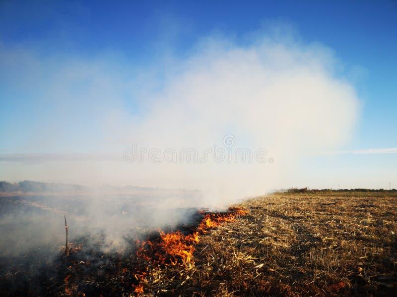 Огонь и густой дым поля стоковое изображение