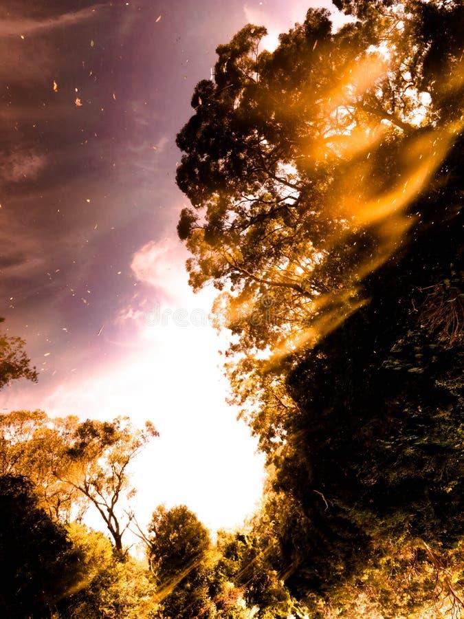 Огонь! сгорите природу в нерезкости джунглей и отразите стоковое изображение