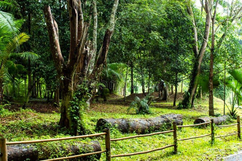 Оградите бамбук идя водопад Si Dit, Phetchabun стоковая фотография rf
