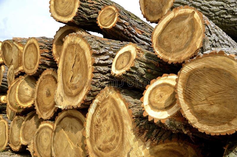 Огромная древесина вносит дальше стог в журнал стоковые изображения rf