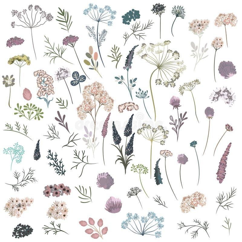 Огромное собрание флористического, заводы, цветки Вектор в watercolo бесплатная иллюстрация