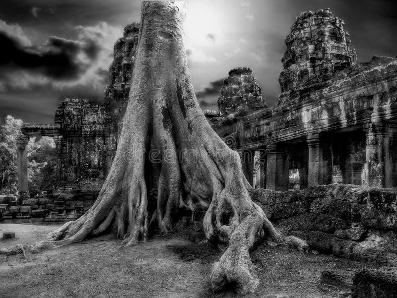 огромные корни джунглей стоковая фотография