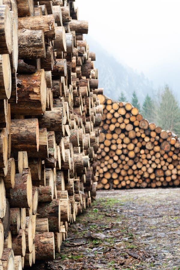 Огромные кучи больших debarked елевых стволов дерева стоковое фото rf
