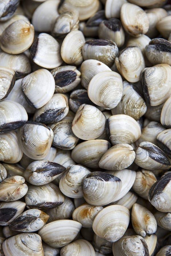Огромные кучи свежих больших раковин clam размера стоковые изображения