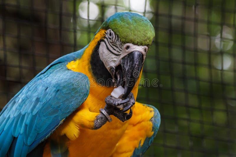 Огромный попугай стоковые фото