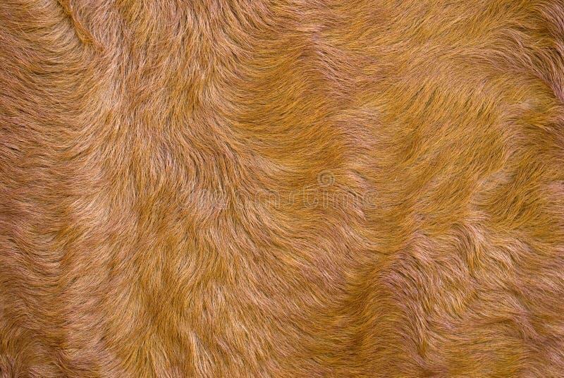 одетьнная шерсть стоковые изображения rf