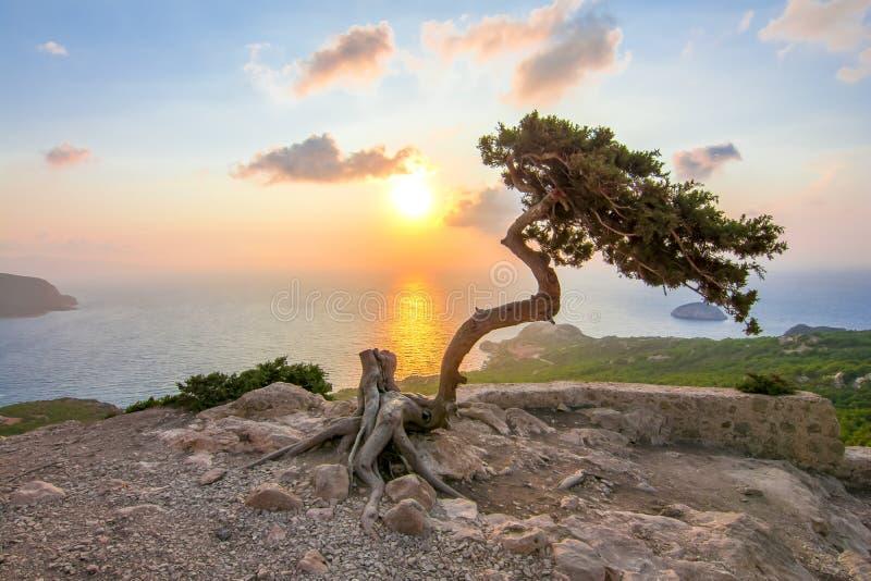 Одинокое дерево возле замка Монолитос на закате, остров Родос, Греция стоковое фото